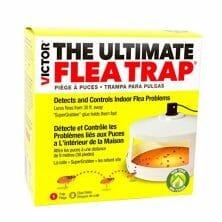 best flea bomb for house